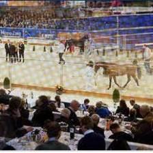 KWPN Stallion show